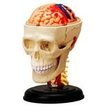4D Master Insan Anatomisi Puzzle - Beyin Sinirsel Sistemi ve Kafatasi Modeli