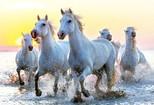 Educa Puzzle White Horses 1000 Parça 17105
