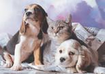 K.Color-Puz.1000 Kedi Köpek Kardeşliği 68x48