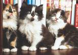 K.Color-Puz.1000 Kütüphanedeki Kediler 68x48