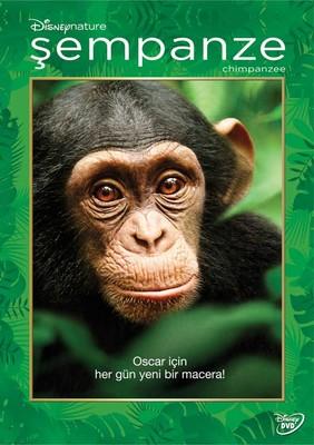 Chimanzee - Şempanze