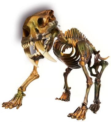 Clementoni Bilim Ve Oyun Arkeolojik Kazi Seti - Kaplan 64222