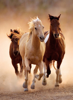 Clementoni 1000 Parça Puzzle Running Horses 39168.4