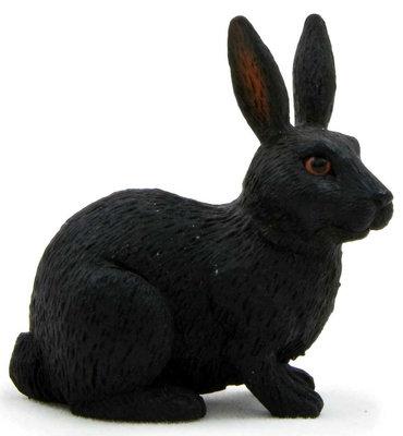 Animal Planet Doga (Agaçlik / Orman) Tavsan Siyah Small 387029