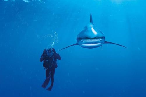 Clementoni 1000 Parça Puzzle Nat Geo - Whitetip Shark 39303
