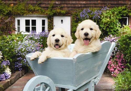Anatolian Bahçivan Köpekler / Puppies In A Wheelbarrow 260 Parça 3310