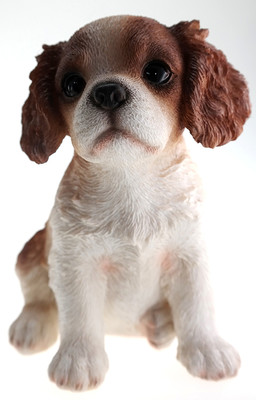 King Charles Spaniel Puppy Biblo Gp-0769