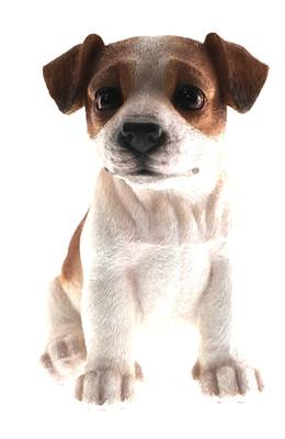 Jack Russell Puppy Biblo Gp-0773