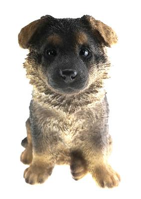 Alsatian Puppy Biblo Gp-0774