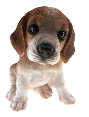 Beagle Puppy Biblo Gp-0775