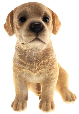 Labrador Puppy Biblo Gp-0780