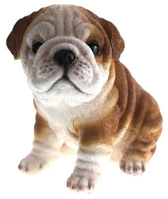 Bulldog Puppy Biblo Gp-0782