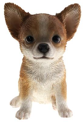 Chihuahua Pupy Biblo Gp-0783