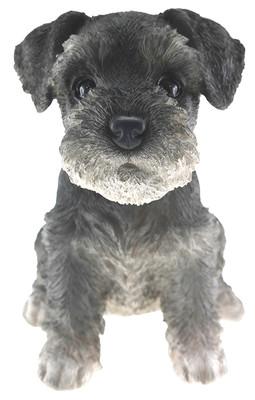 Schnauzer Puppy Biblo Gp-0784