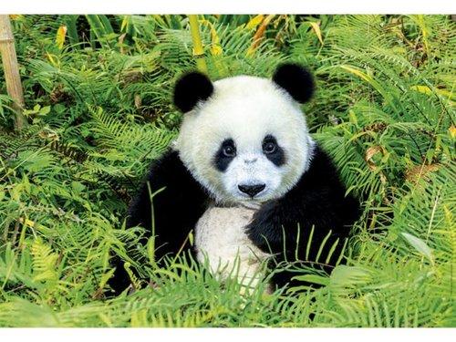 Educa Puzzle Panda Bear 500 Parça 17082