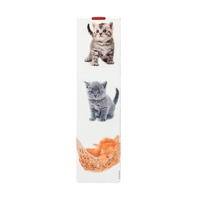 Legami Ayrac-Lg Book Cats