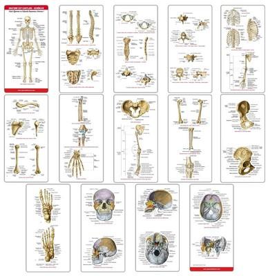 Anatomi Cep Kartları Kemikler
