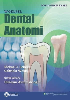 Woelfel Dental Anatomi